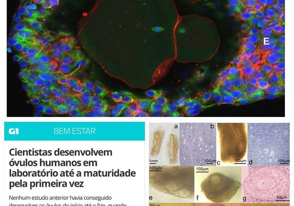 Óvulos humanos em laboratório